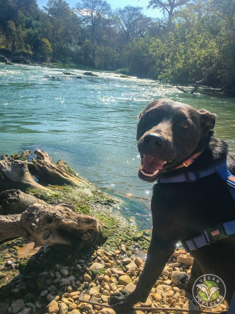 Lulu loves the river