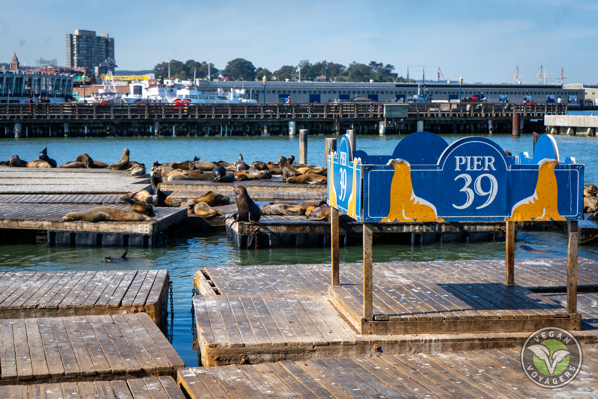 San Francisco Travel Guide | Pier 39