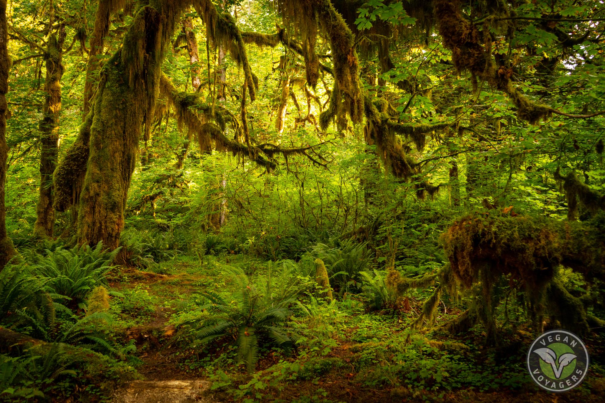 Hoh Rainforest | 10 Unique Landscapes to Visit on a West Coast Road Trip