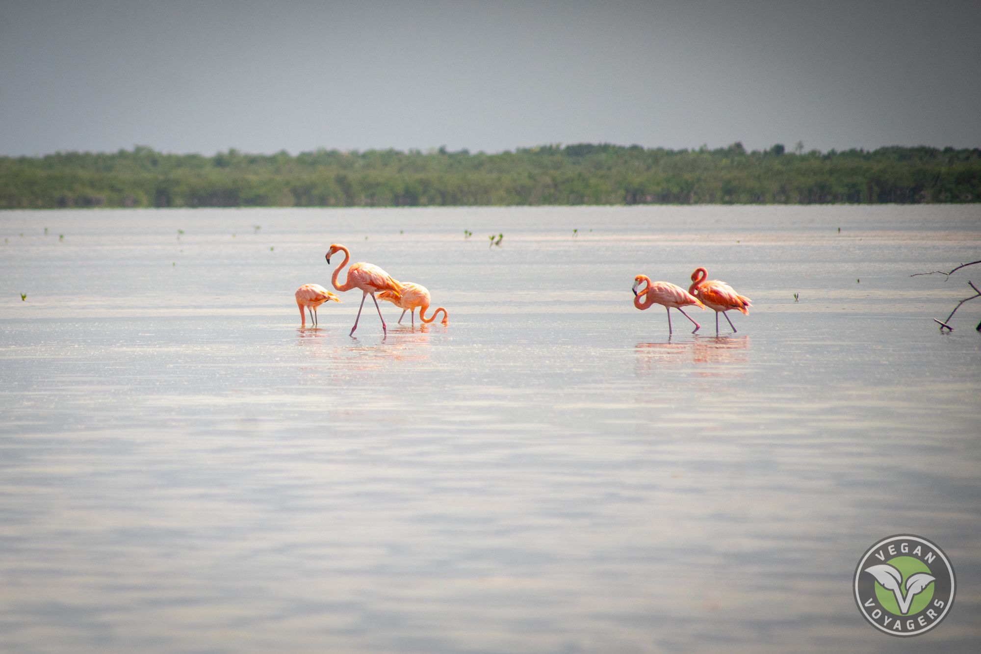 Flamingos   Tips for Visiting Isla Holbox, Mexico